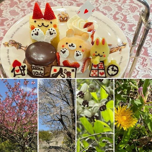八重桜や名残り桜が満開🌸🌸今日も色んな花咲く不思議の国の花園に迷い込んでくださいね。❣️