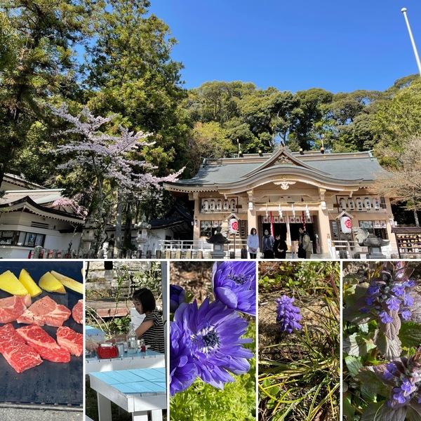 今日は4月1日桜満開の公智神社の月次祭⛩アリスの森の桜も咲く🌸🌸昨日は今年初のガーデンバーベキュー🥩青い花咲く不思議の国の花園に迷い込んでくださいね。