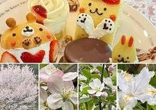 今年のトレンドスイーツ❣️マリトッツオも楽しめる不思議の国のアフタヌーンティーを林檎の花咲くアリスでお楽しみくださいね。