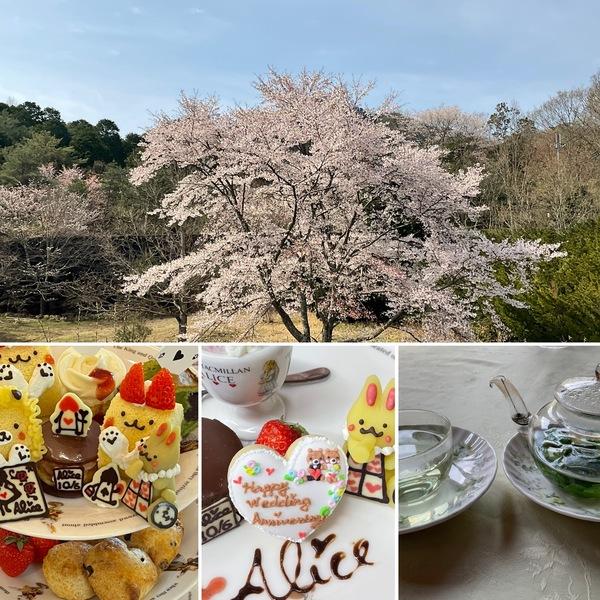 満開のアリスの桜を眺めて、アフタヌーンティーやお祝い事などお楽しみくださいね。ハーブも芽吹き、ハーブティーの香りに癒されてくださいね。