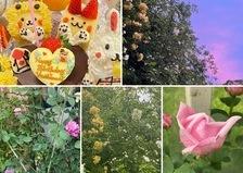 そろそろモッコウバラが本番🥰バラ咲く不思議の国でお誕生日会やアフタヌーンティーetcお楽しみくださいね。