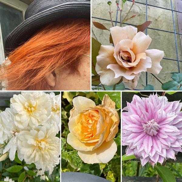 昨日は、髪の毛サラサラツヤツヤ❗️ヘナの体験会👩🔬今日も薔薇香る不思議の国の花園に迷い込んでくださいね。