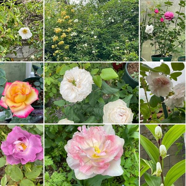 モッコウバラが香り、色んな花咲く不思議の国の花園に迷い込んでくださいね。