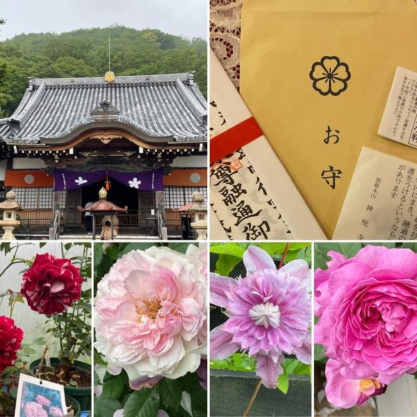 1日遅れで神呪寺にお参り🙏今日もバラ🌹香る不思議の国の花園に迷い込んでくださいね。