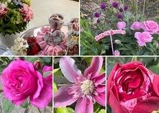 昨日は母の日❣️子どもたちからのプレゼント💐今日も薔薇香る不思議の国の花園に迷い込んでくださいね。