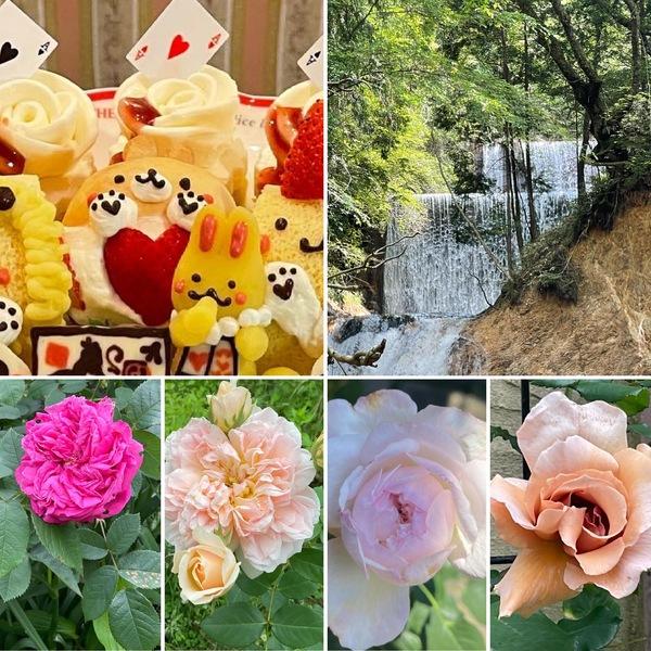 新緑と薔薇香る不思議の国の花園で、ゆっくり遠足気分で「森時間」お楽しみくださいね。