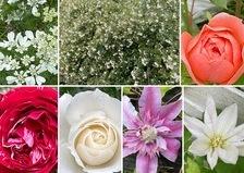 モッコウバラ香る不思議の国の花園💐バラの開花が始まっています。
