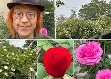 昨日は、オーガニック ヘナ体験会を開催❣️モッコウバラ&ナニワイバラ満開の不思議の国の花園に迷い込んでくださいね。🥰