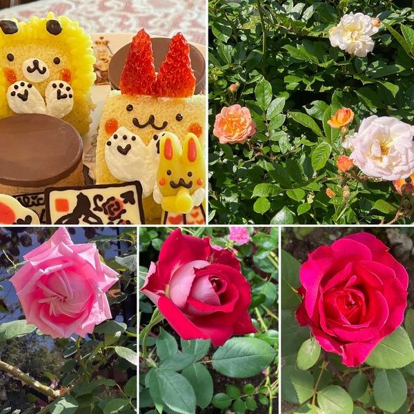 薔薇香る不思議の国で、ランチorアフタヌーンティーで心弾むひと時をお楽しみくださいね。
