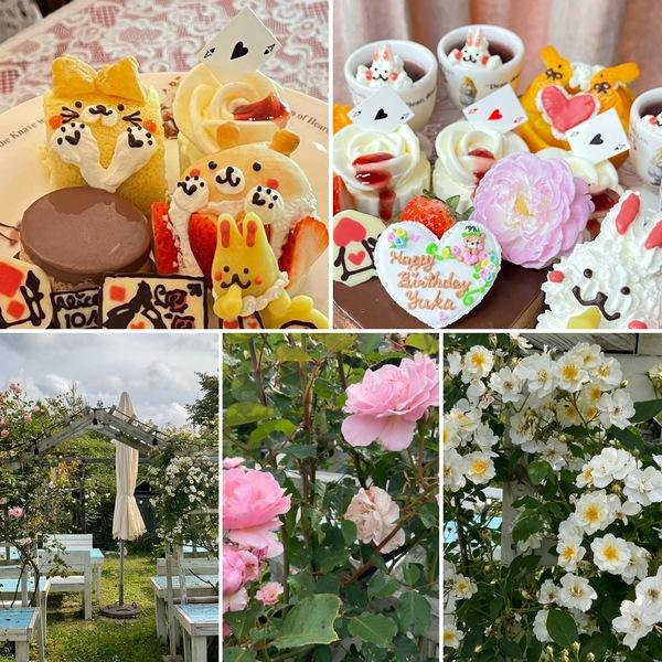 昨日は、アフタヌーンティーやお誕生日会で賑わったアリス🥰バラアーチが彩り始めた不思議の国の花園に迷い込んでくださいね。