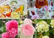 アリスのかわいいケーキでお誕生日会🎉アジサイも咲き出したバラ香る不思議の国のひと時お楽しみくださいね。