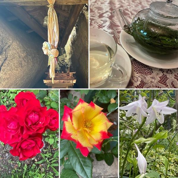 昨日は山羊座満月🌕六甲ひめ神社にお参り⛩庭のレモンバームでリラックス🍃🍻今日も色んな花咲く不思議の国の花園に迷い込んでくださいね。🥰