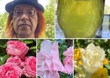 昨日は、オーガニックヘナの体験会を開催❣️夏場のおすすめ水出し緑茶🍵カシワバアジサイが咲き出した不思議の国です。