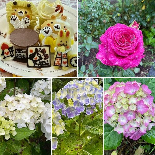バラ香る花園で味わう不思議の国のアフタヌーンティー🍰梅雨空でアジサイも元気よく咲いていますよ🥰