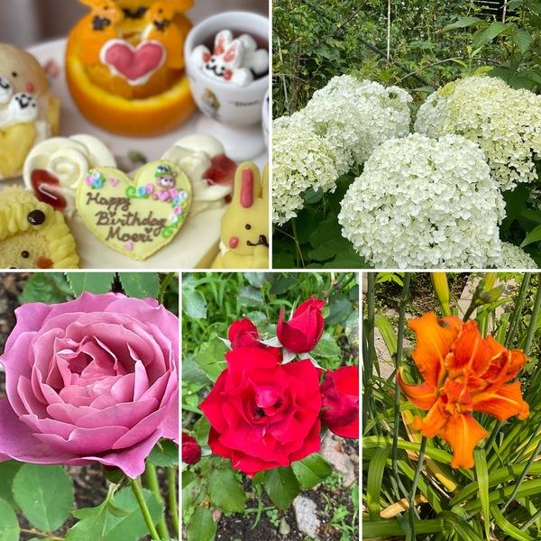 バラの二番花とアジサイ、そしてノカンゾウも咲き出した不思議の国の花園に迷い込んでくださいね。🥰