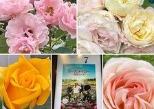 映画ローズメイカー奇跡の薔薇🌹が上映中📽🎞今日も薔薇香る不思議の国の花園に迷い込んでくださいね。🥰
