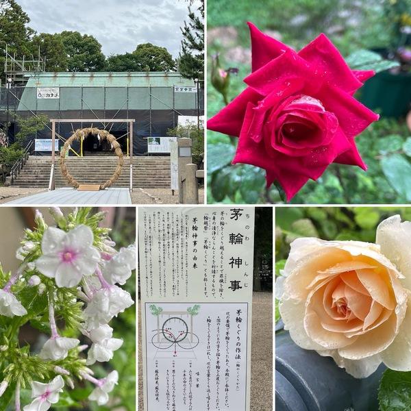 廣田神社で茅の輪くぐり⛩フロックスも咲き出した不思議の国の花園に迷い込んでくださいね。🥰