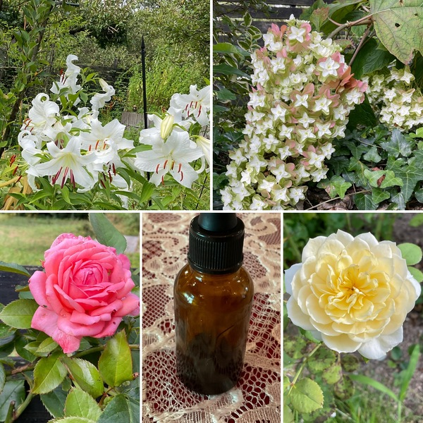 ドクダミとヨモギの魔法の小瓶🍾カサブランカ満開の不思議の国の花園に迷い込んでくださいね。🥰