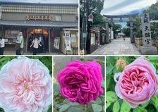 昨日は、天満天神繁昌亭へ😊今日も夏バラ咲く不思議の国の花園です。