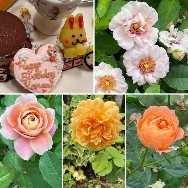 昨日も蛍鑑賞兼ねてお誕生日のお祝い🎉蛍に魅了されました。🥰今日もバラ咲く不思議の国の花園に迷い込んでくださいね。