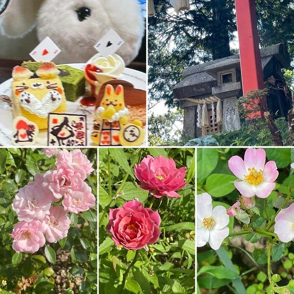 菊理嬢命のお光あふれる六甲山神社にお詣り⛩ふろん茶まえけんが草刈りしてくれた不思議の国の花園に迷い込んでくださいね。🤗