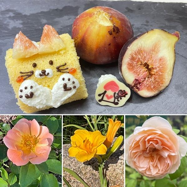 パテシエアリスの新作「旬のいちじくのロールケーキ」❣️色んな花咲く不思議の国の花園でお楽しみくださいね。🤗