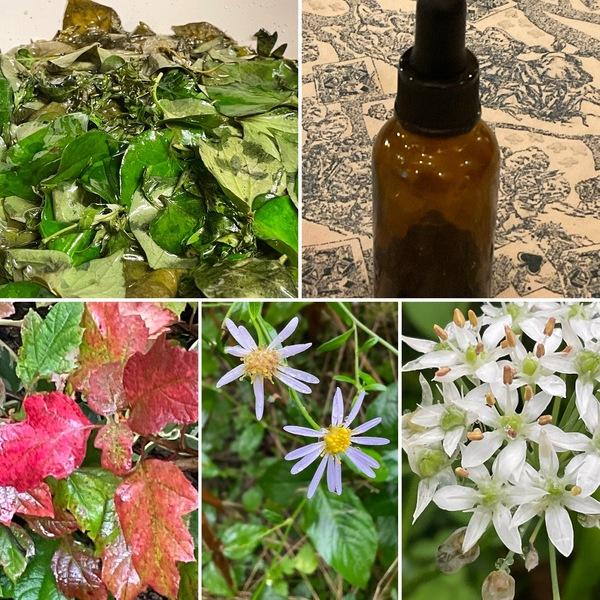庭のドクダミとヨモギで薬草オイル作り❣️不思議の秋お楽しみくださいね。🤗