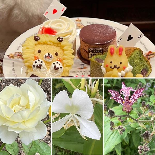 暦は、秋分。秋が深まる不思議の国の花園で、かわいいケーキでくつろぎのひと時をお楽しみくださいね。🤗