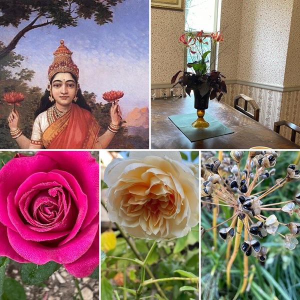 10月26日美と健康を学び合うサロン アリスの森ラクシュミーOPENします。今日も不思議の国の秋のひと時をお楽しみくださいね。🤗