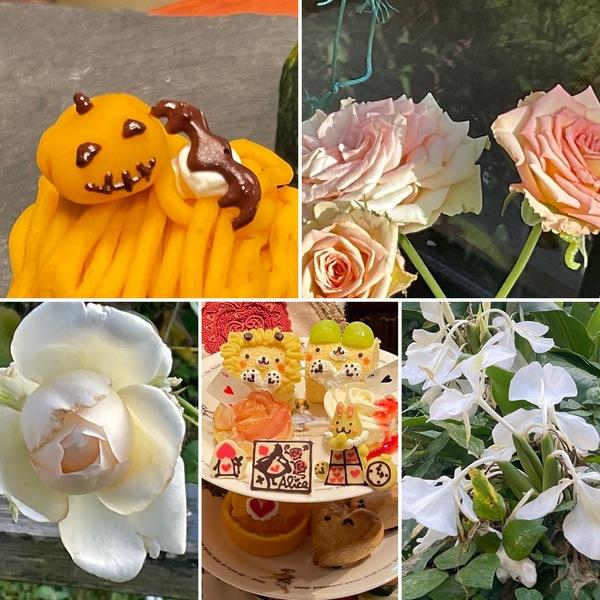 パテシエアリスの秋の新作 ハロウィン🎃パンプキンモンブラン🏔不思議の国の秋のひと時をお楽しみくださいね。🤗