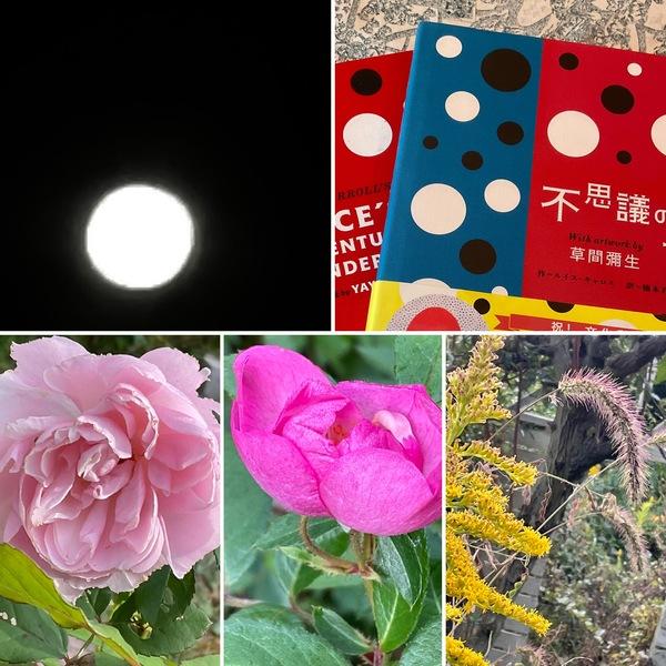 昨夜は満月🌕ベッド🛌に寝ながらのお月見😊アリスの絵本を直島土産でいただきました。📚秋がさらに深まる不思議の国に迷い込んでくださいね。🤗